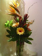 Bird of paradise, gerbera, leucadendron, alstroemeria, waxflowers, fatsia japonica, and curly willow