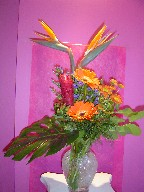 Bird of paradise, gerbera, ginger, monte casino blue, coffee beans, and monstera