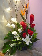 Bird of paradise, ginger,roses, calla lillies, casablanca, pompoms, hypericum, and curly willow