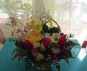 Tulips, boronia, mini carnations, daisies, orchids, iris, and osiana roses in a basket